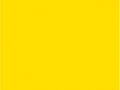 24.Sunflower