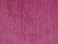 Fuchsia-69699AZZ20